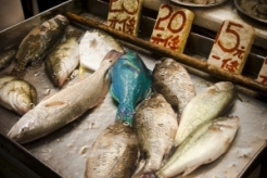 fresh-fish-for-sale-1342715-m
